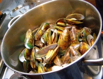 Green-lipped mussels in Marlborough