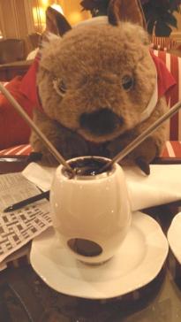 Morris the wombat at Sir Stamford