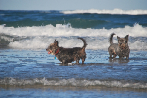 marcus-beach-dogs