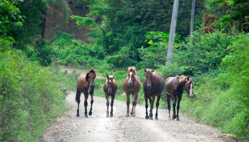 On a road between the villages, we came across some wandering horses.