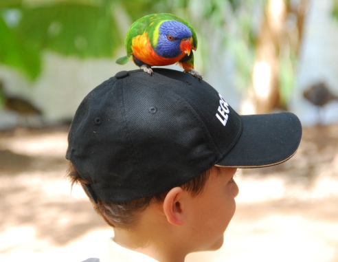 Rainbow lorikeets don't mind where they land!