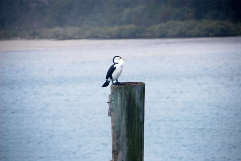 On the jetty.