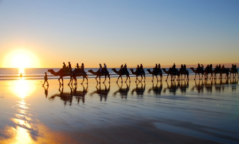 Camels on cable beach, Copyright Lee Mylne