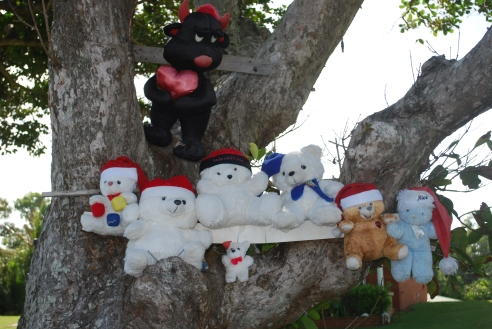 Christmas teddies, Mission Beach, north Queensland.