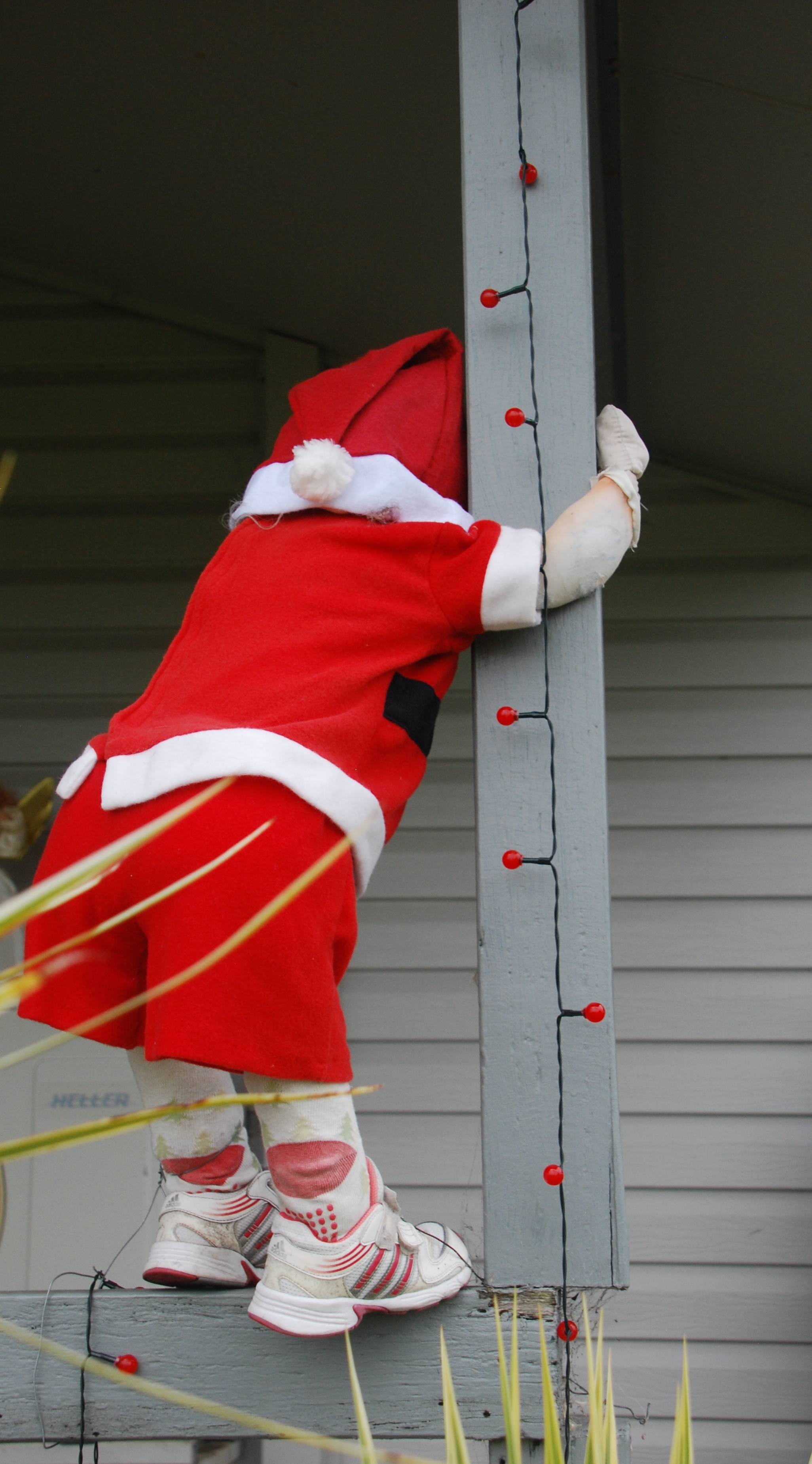 Small Santa, climbing up the verandah post, Summerland Way, NSW.