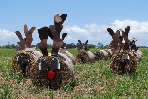 Happy Christmas from the haybale reindeer, Sunshine Coast Hinterland, Queensland.